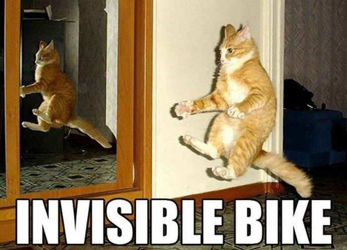 Invisible Bike Cat Meme