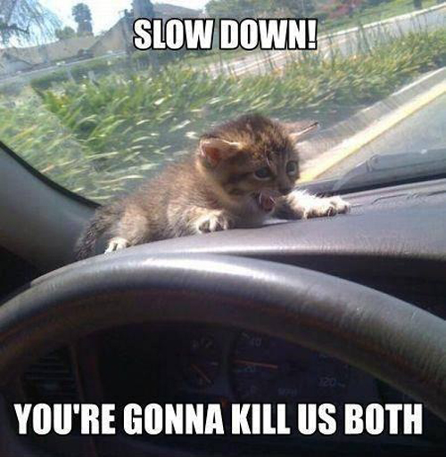 Slow Down Scared Cat Meme
